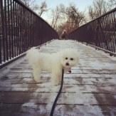 dog on Bryant Avenue Bridge
