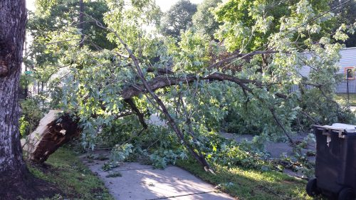 Tree Limb on 200 block of 17th Avenue NE