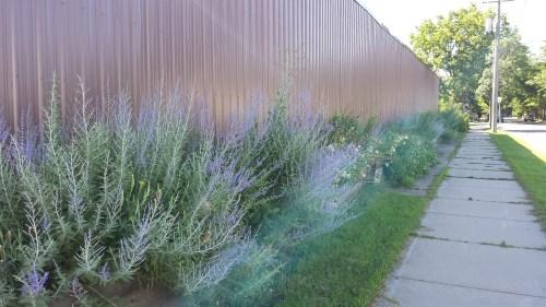 Plantings Along Siwek's Fence, 1800 Block of Grand St NE
