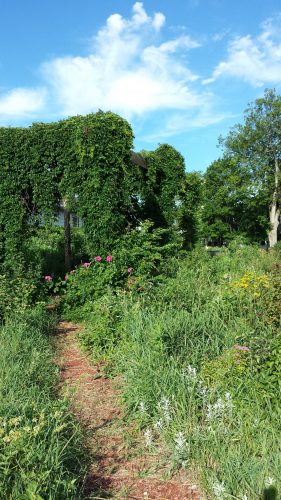 Bancroft Meridian Food Forest