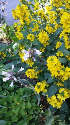 Pretty Flowers (2500 Block of Garfield—the Diagonal Block)