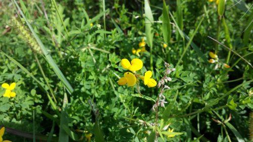Even More Flora