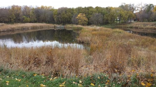 Cedar Meadows Ponds and Wetland