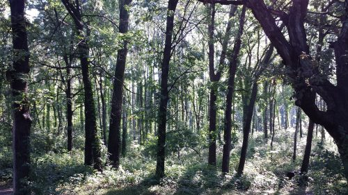 Woods Along the Trail