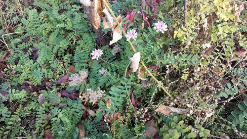 Riverside Flowers on November 15th