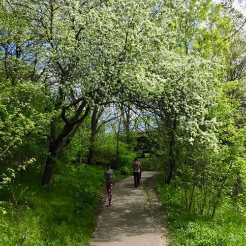 Minnehaha Creek Grand Rounds Trail