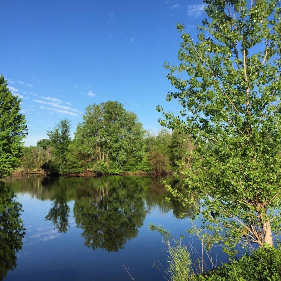 Richfield Lake Park trees