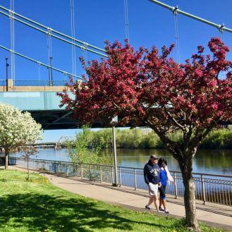 Flowering trees near Mississippi River