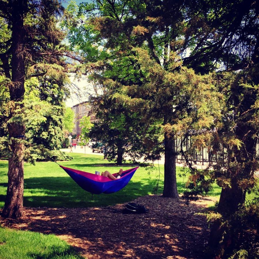 Hammock in a tree