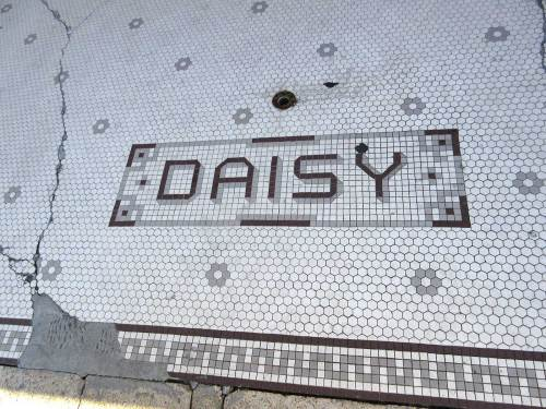 DAISY in tile, dark red with drop shadow and soap-bubble-like border