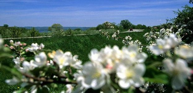 Apple Blossom Parkway