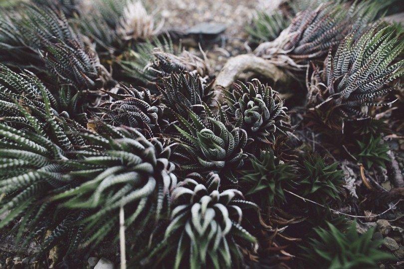 succulent-984106_960_720