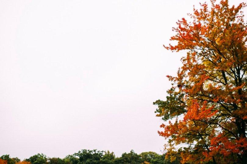 Autumn leaves | streetsandstripes.com