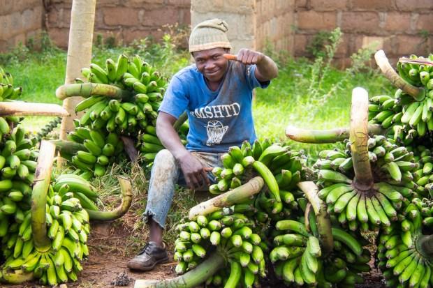 Banana Market Mika Tanzania