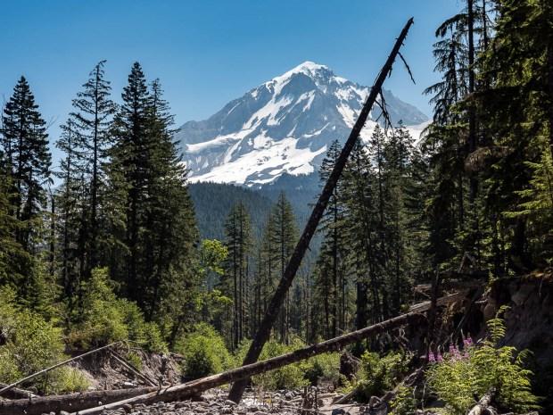 Ramona Falls Hike Mount Hood 01