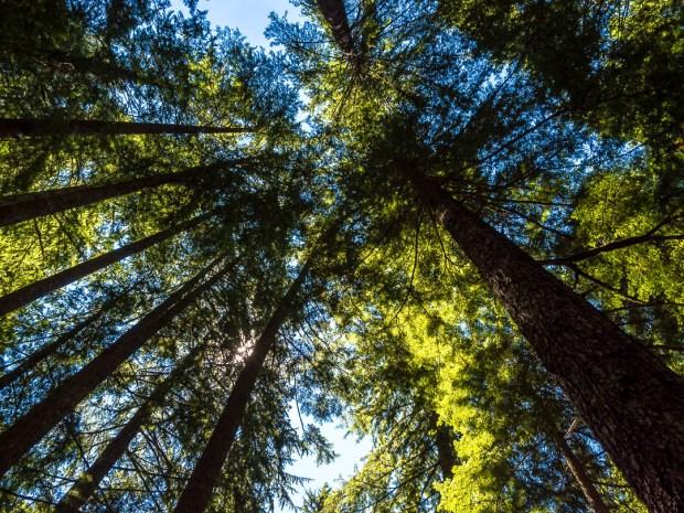 Ramona Falls Hike Mount Hood 06