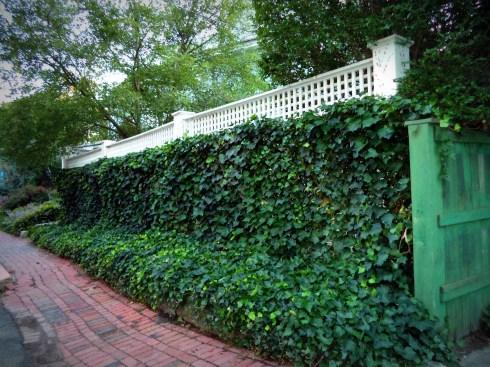 Fences 037
