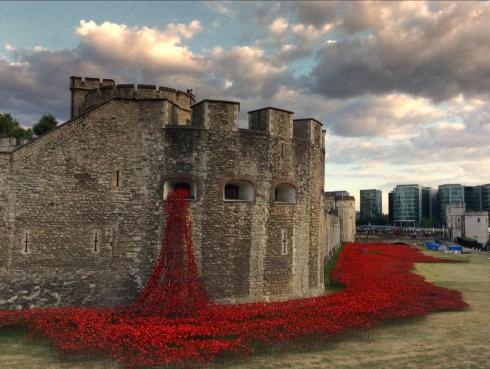 Poppies at Tower