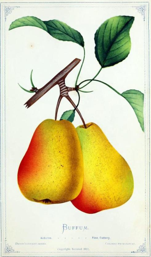 Pears Buffum 1877