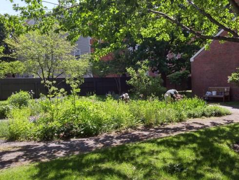 Derby House Garden