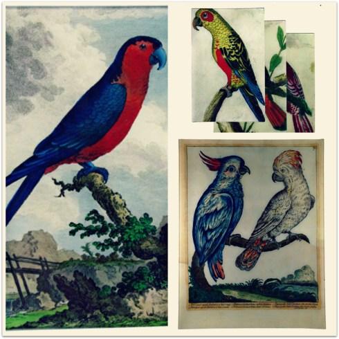 Derian Parrots