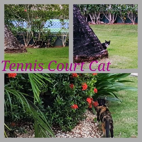 Caribbean Cats 7