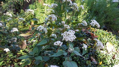 Fall Garden 11