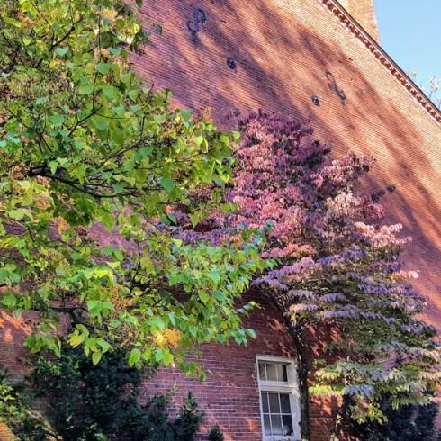 Fall Garden 8