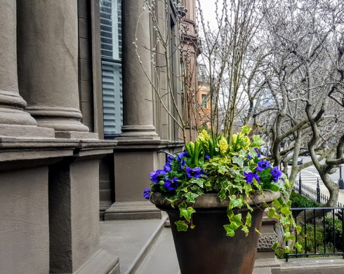 Back Bay Easter Flowers