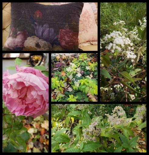 Foraged Flora garden
