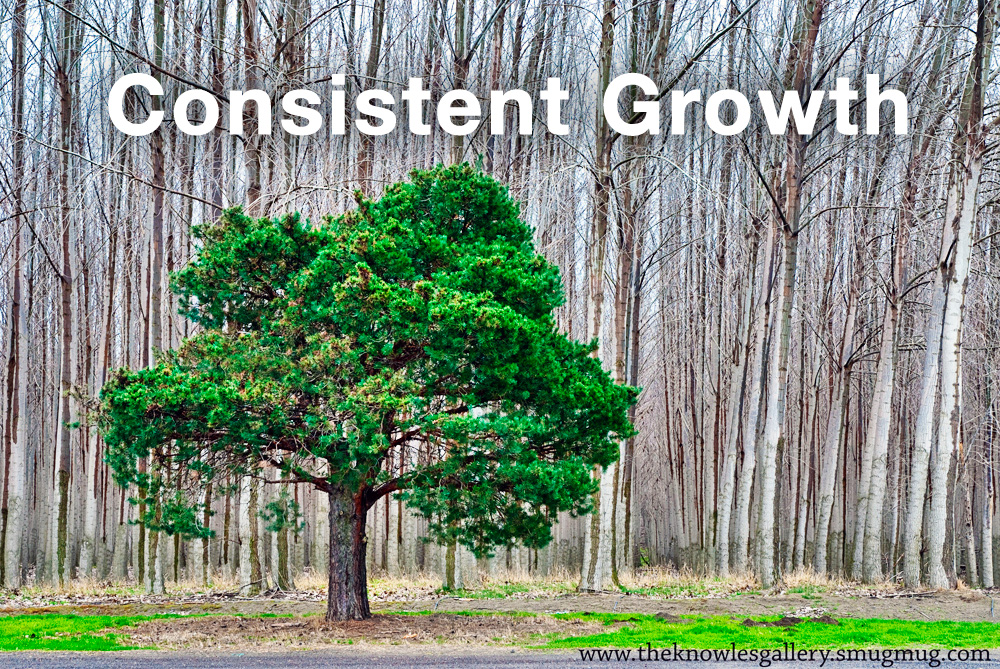 A picture of an evergreen tree representing consistent real estate online lead growth