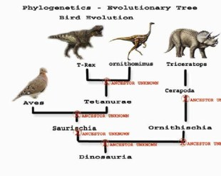 Dinosaurs - Tree - Phylogenetic