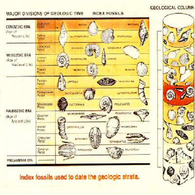 Fossils - Index