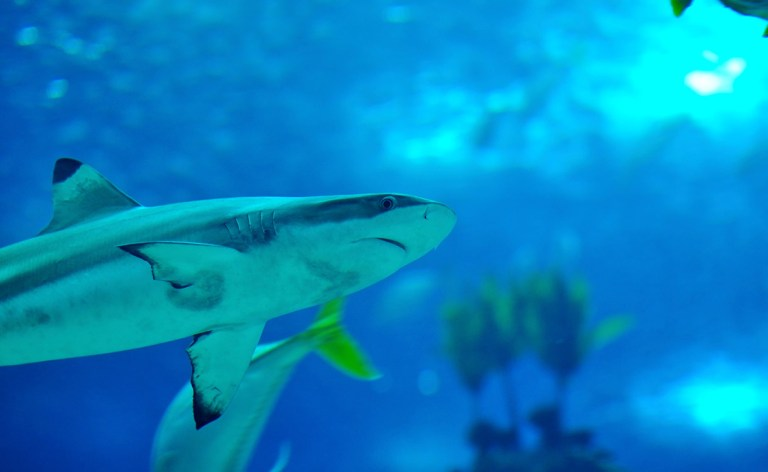 shark-exhibit_2