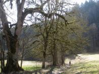 unter grün bemoosten Bäumen in der Schlucht