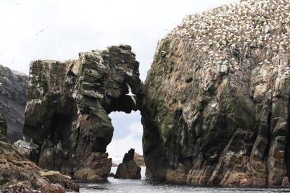 Basstölpelfelsen an den Flannan Isles