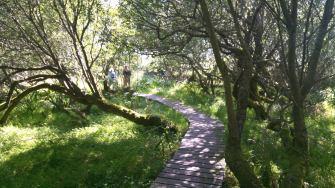 Moorweg am Loch Gruinart
