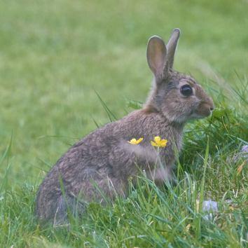 Kaninchen in unserem Garten