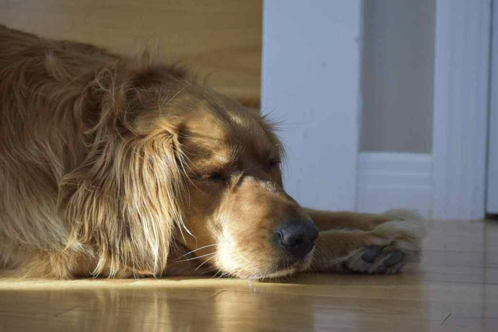 Penny sleeping