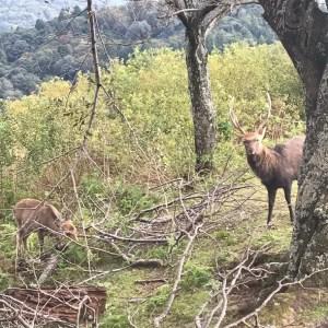 鹿の増加と生態系の保全。害獣が増えたわけ