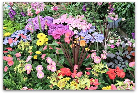 What is your birth flower?