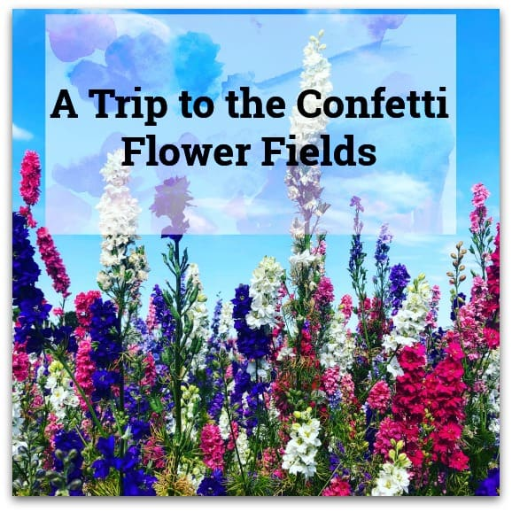 A Trip to the Confetti Flower Fields