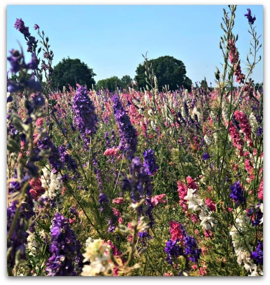 Why I want more flowers in the garden - Confetti Fields