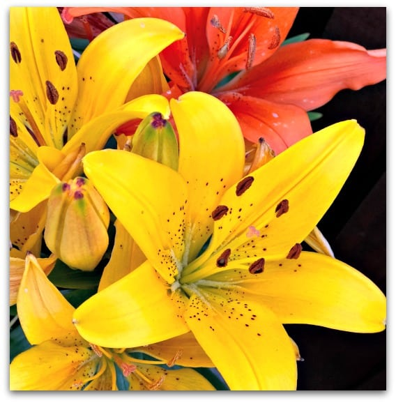Why I want more flowers in the garden - Lilies