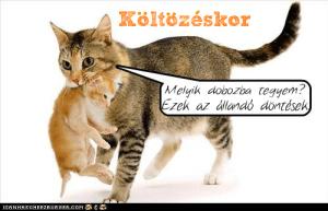 koltozes_