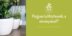 A szobanövények és a költözés