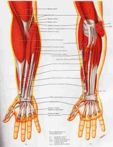 Golfers Elbow | Elbow Tendonitis and Elbow Pain