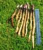Japanese Medicinal Herb Seed Collection (Ashitaba; Burdock, Gobo; Burdock, Takinogawa; Shungiku; Yomogi)