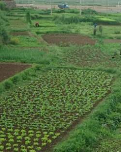 Chinese Medicinal Herb Seed Collection (Dan-shen, Dang-shen, Tien-hua-fien, Huang-Qi, Yi-mu-cao, Ku-shen, Tou-gu, Wu-we-zi)