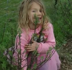 Southernwood (Artemisia abrotanum) potted plant, organic